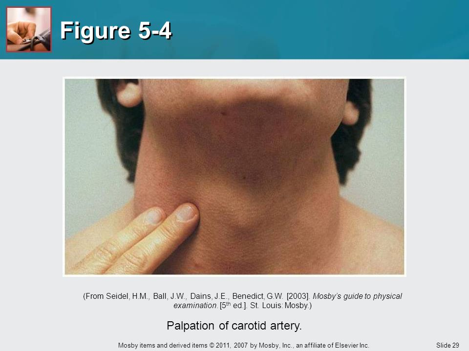Slide 29 Mosby items and derived items © 2011, 2007 by Mosby, Inc., an affiliate of Elsevier Inc. Figure 5-4 Palpation of carotid artery. (From Seidel