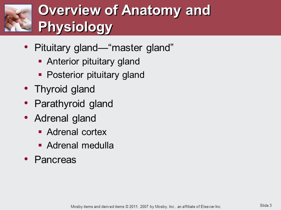 "Slide 3 Mosby items and derived items © 2011, 2007 by Mosby, Inc., an affiliate of Elsevier Inc. Pituitary gland—""master gland""  Anterior pituitary g"