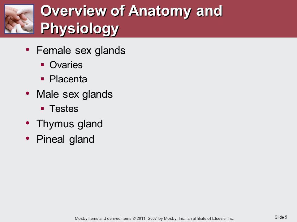 Slide 16 Mosby items and derived items © 2011, 2007 by Mosby, Inc., an affiliate of Elsevier Inc.