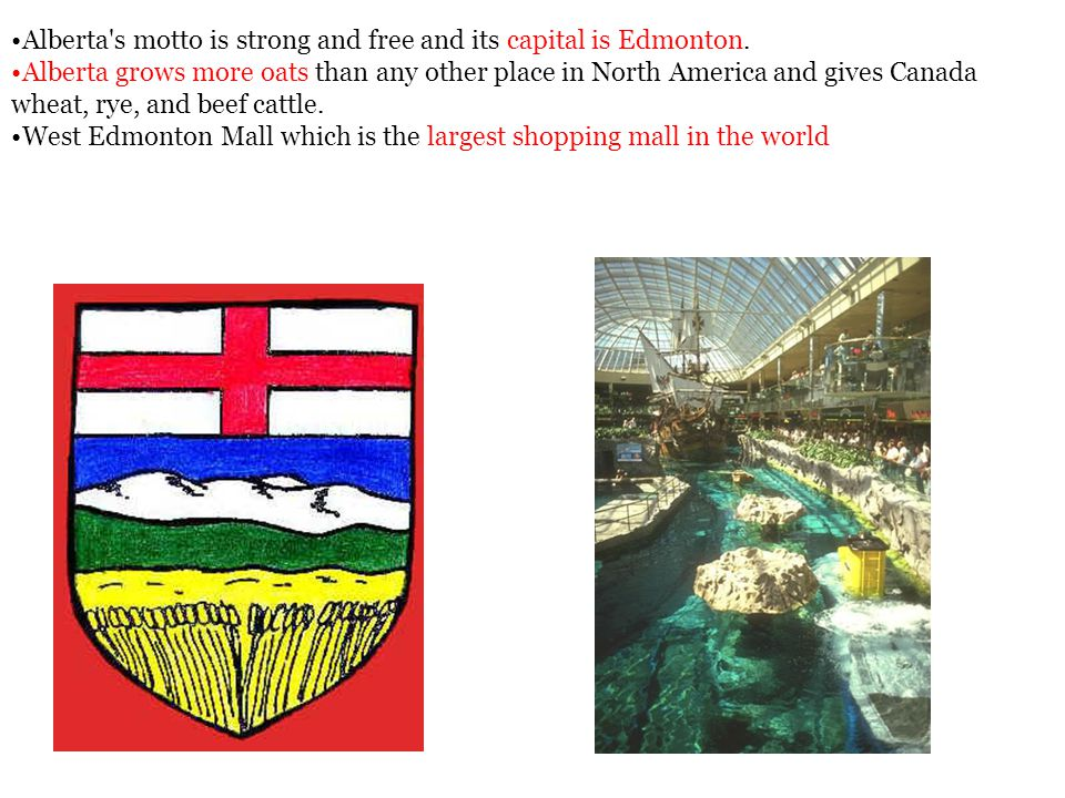 Alberta's motto is strong and free and its capital is Edmonton. Alberta grows more oats than any other place in North America and gives Canada wheat,