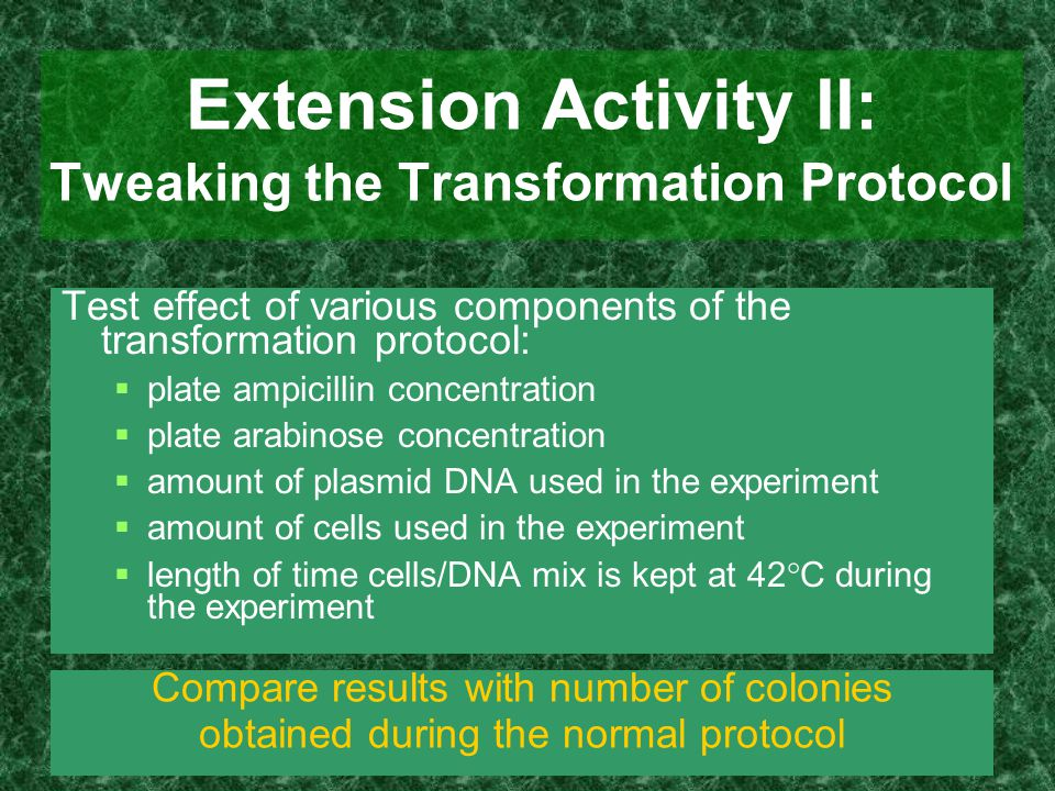 Extension Activity II: Tweaking the Transformation Protocol Test effect of various components of the transformation protocol:  plate ampicillin conce