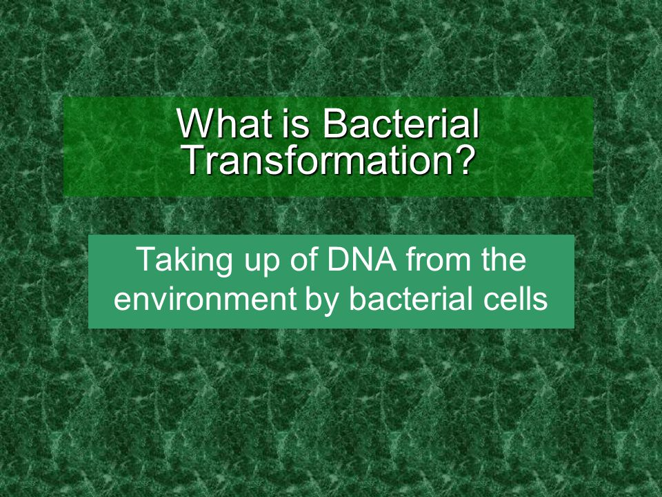What is Bacterial Transformation? Taking up of DNA from the environment by bacterial cells