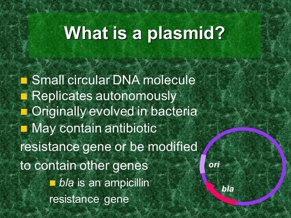 What is a plasmid? Small circular DNA molecule Replicates autonomously Originally evolved in bacteria May contain antibiotic resistance gene or be mod
