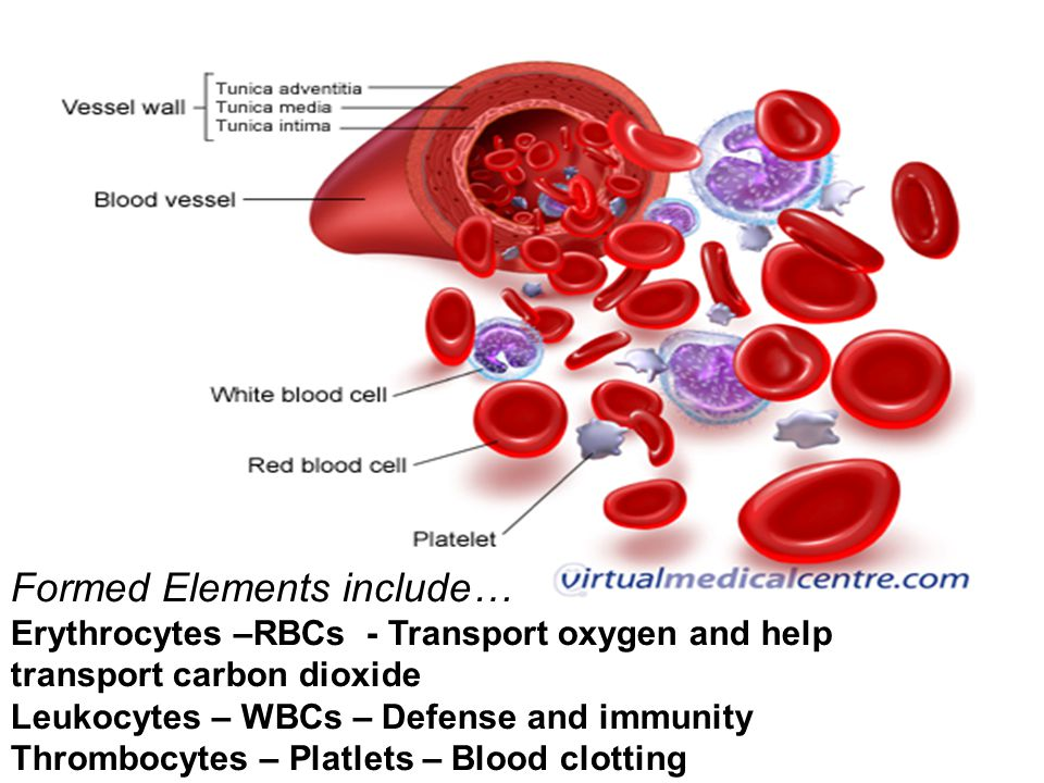 Formed Elements include… Erythrocytes –RBCs - Transport oxygen and help transport carbon dioxide Leukocytes – WBCs – Defense and immunity Thrombocytes
