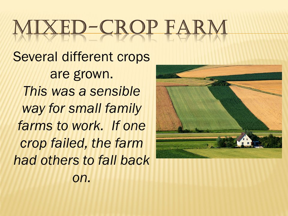 Several different crops are grown.This was a sensible way for small family farms to work.