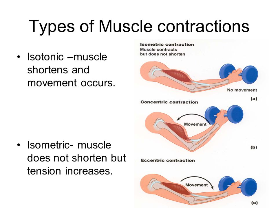 Muscle movement diagram wiring library major functions of muscular system images human anatomy organs diagram rh awmg info muscle diagram worksheet eye muscle movement diagram ccuart Image collections