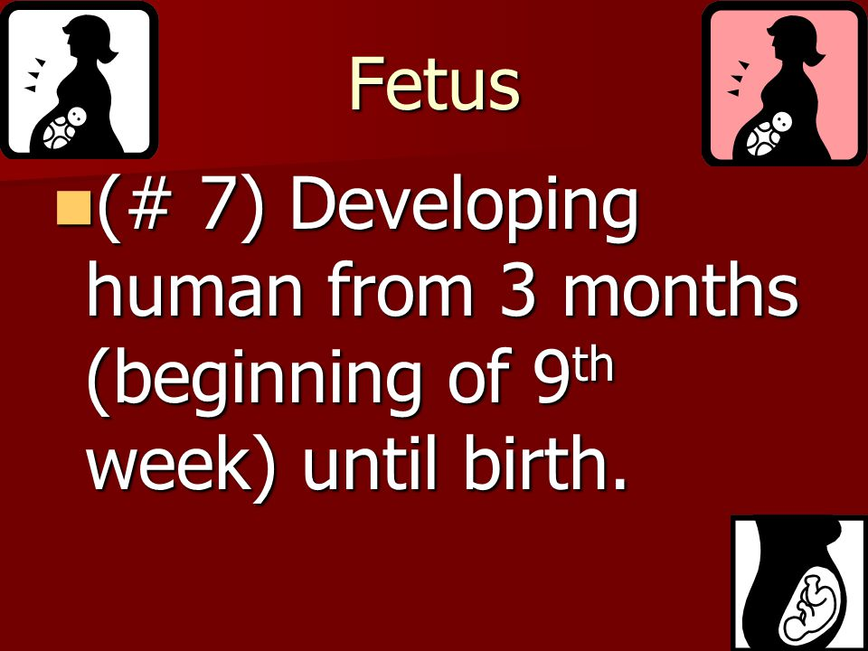 Fetus (# 7) Developing human from 3 months (beginning of 9 th week) until birth.