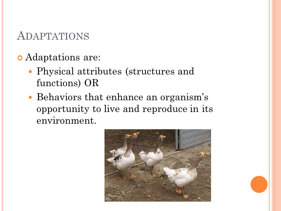 A DAPTATIONS Adaptations are: Physical attributes (structures and functions) OR Behaviors that enhance an organism's opportunity to live and reproduce in its environment.