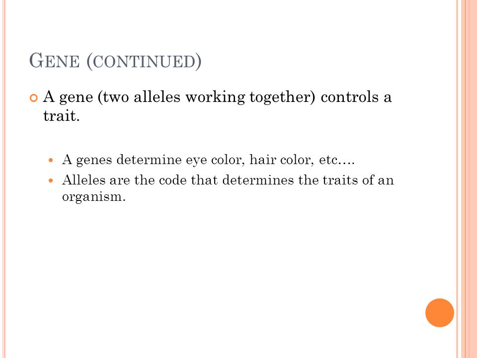 G ENE ( CONTINUED ) A gene (two alleles working together) controls a trait.