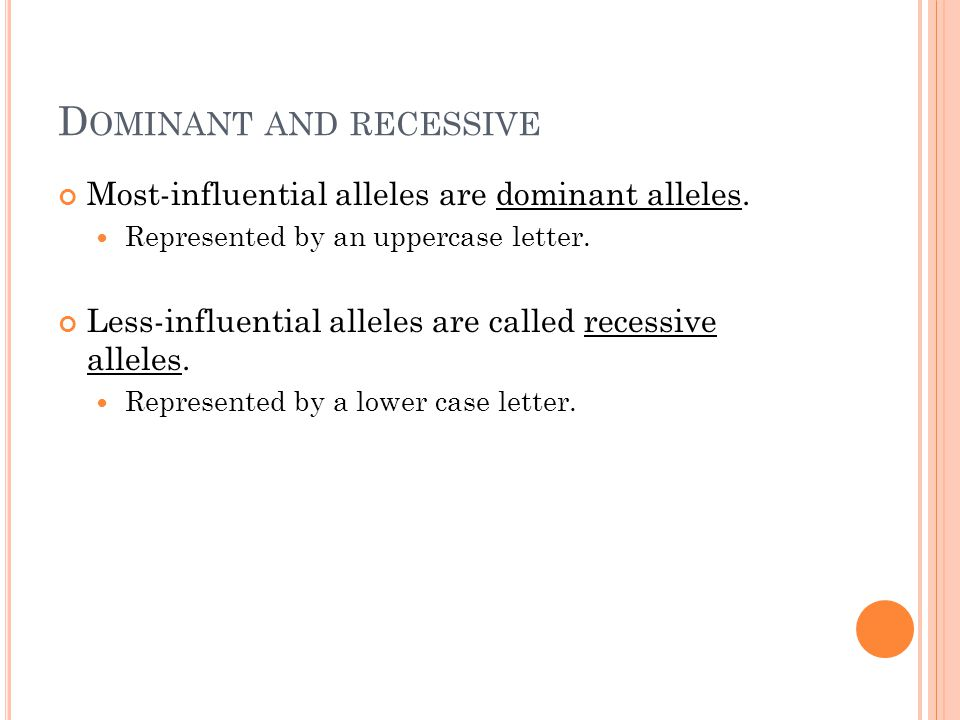D OMINANT AND RECESSIVE Most-influential alleles are dominant alleles.