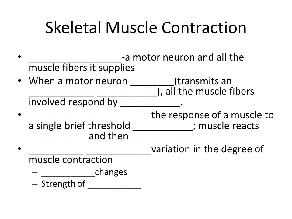 Skeletal Muscle Contraction _________________-a motor neuron and all the muscle fibers it supplies When a motor neuron ________(transmits an ____________ ___________), all the muscle fibers involved respond by ___________.