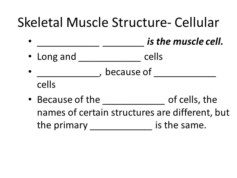 Skeletal Muscle Structure- Cellular ____________ ________ is the muscle cell.