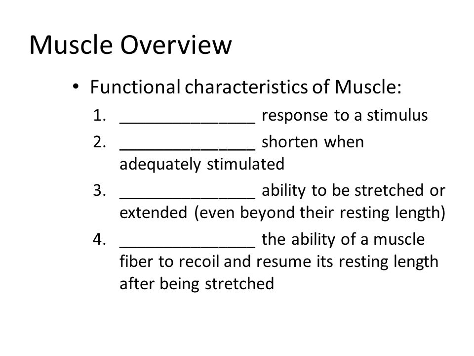 Muscle Overview Functional characteristics of Muscle: 1._______________ response to a stimulus 2._______________ shorten when adequately stimulated 3._______________ ability to be stretched or extended (even beyond their resting length) 4._______________ the ability of a muscle fiber to recoil and resume its resting length after being stretched