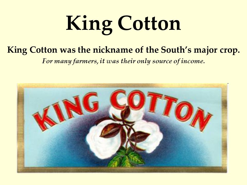 King Cotton King Cotton was the nickname of the South's major crop.