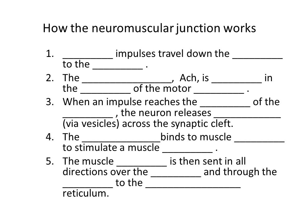 How the neuromuscular junction works 1._________ impulses travel down the _________ to the _________. 2.The ________________, Ach, is _________ in the