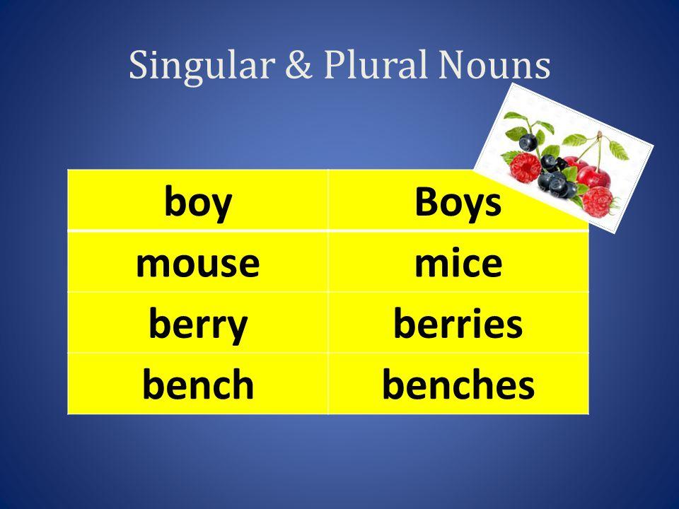 Singular & Plural Nouns boyBoys mousemice berryberries benchbenches