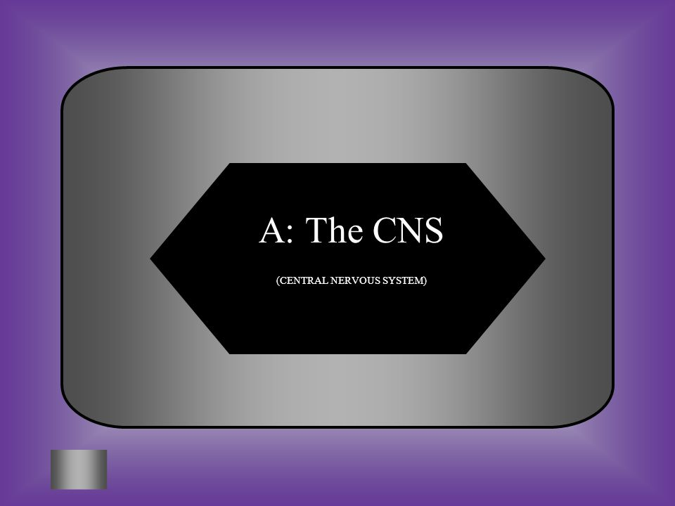 A: The CNS (CENTRAL NERVOUS SYSTEM)