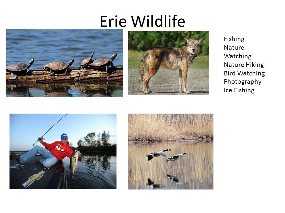 Erie Wildlife Fishing Nature Watching Nature Hiking Bird Watching Photography Ice Fishing