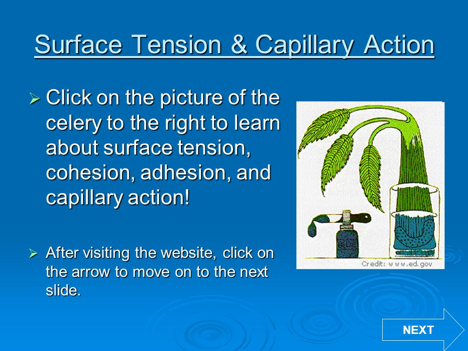 Surface Tension & Capillary Action  Click on the picture of the celery to the right to learn about surface tension, cohesion, adhesion, and capillary action.