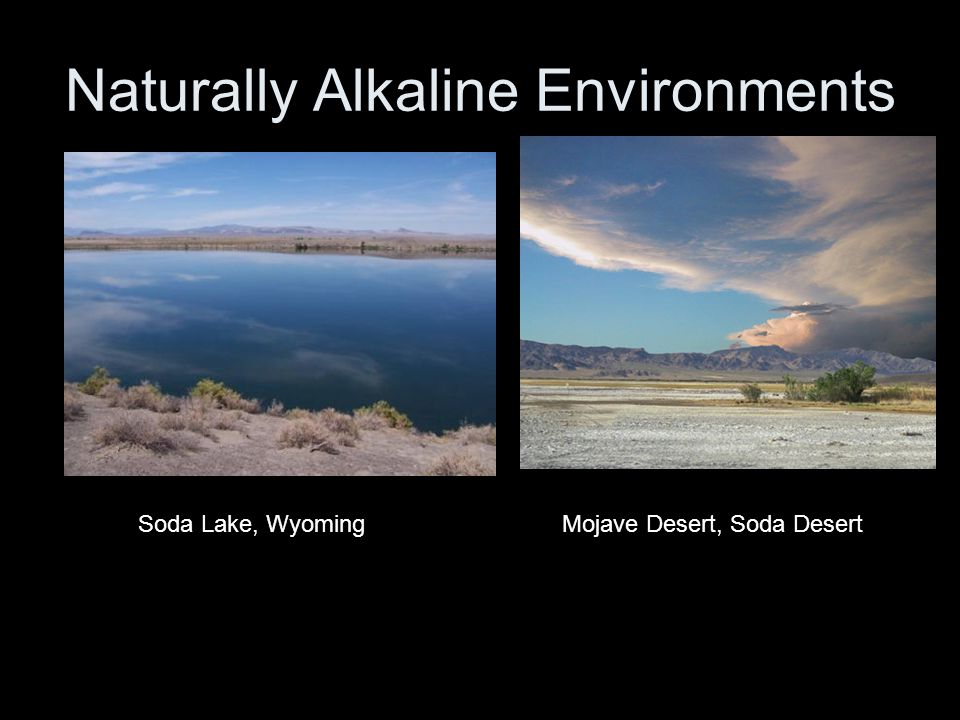 Naturally Alkaline Environments Soda Lake, WyomingMojave Desert, Soda Desert
