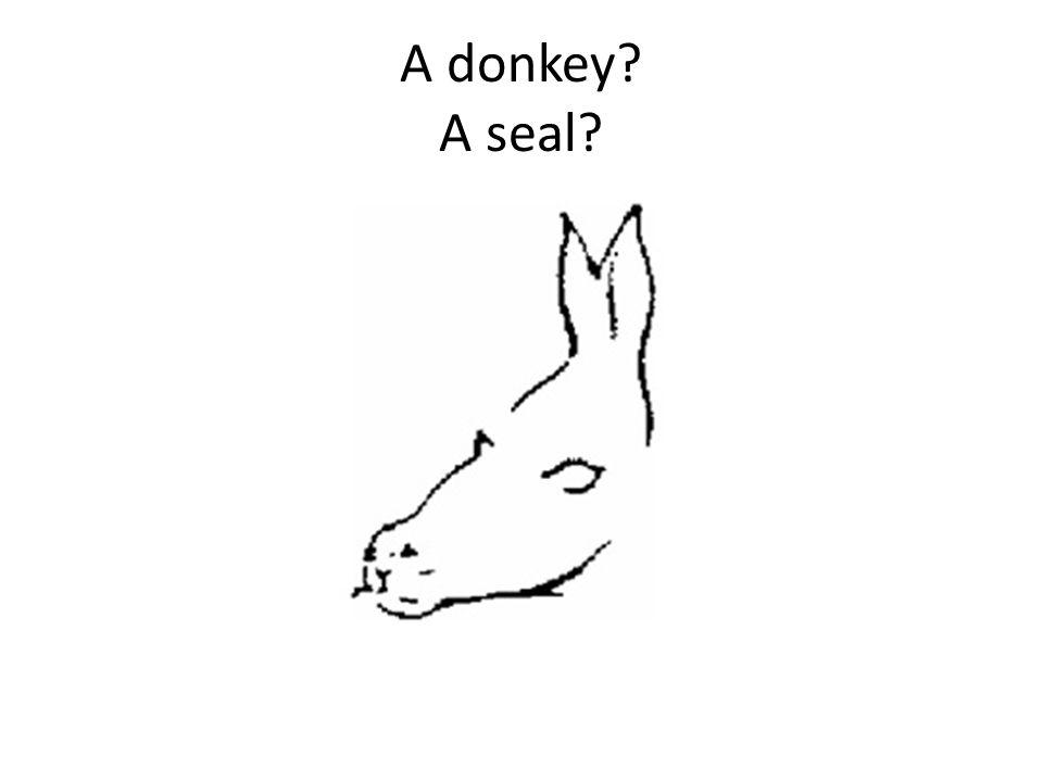 A donkey A seal