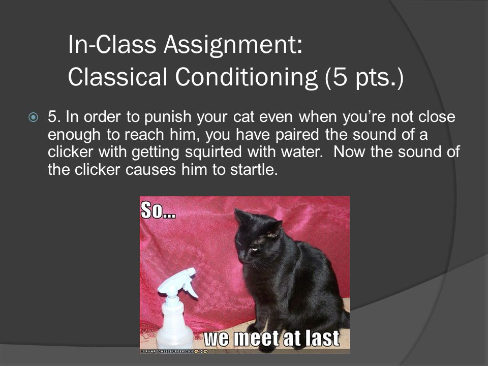 In-Class Assignment: Classical Conditioning (5 pts.)  5. In order to punish your cat even when you're not close enough to reach him, you have paired