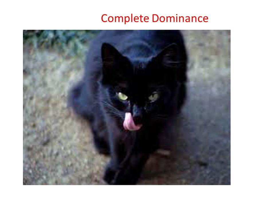 Complete Dominance