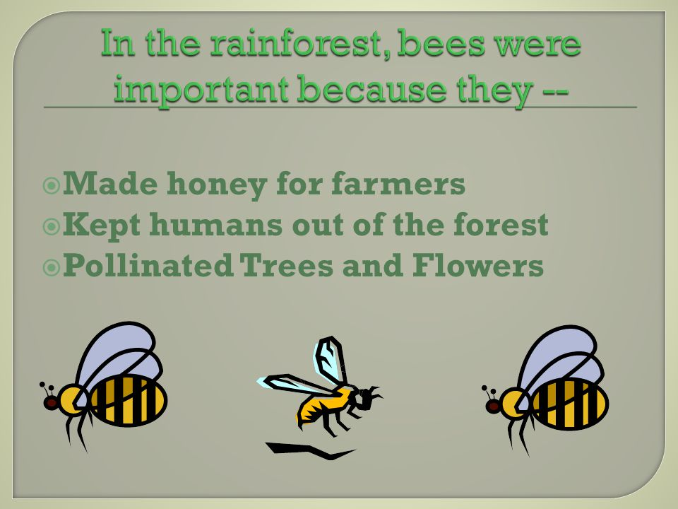 MMade honey for farmers KKept humans out of the forest PPollinated Trees and Flowers