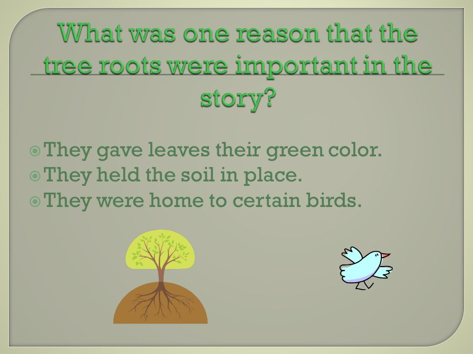 TThey gave leaves their green color. TThey held the soil in place.