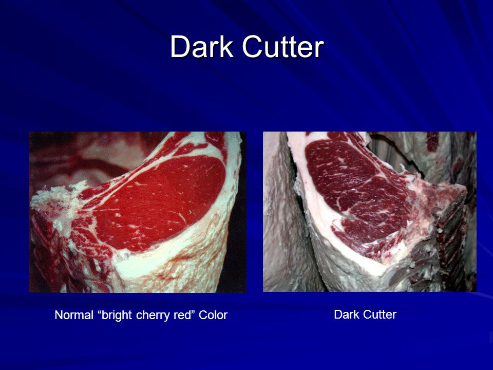 Dark Cutter Normal bright cherry red Color Dark Cutter