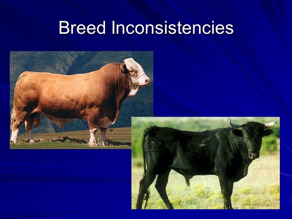 Breed Inconsistencies