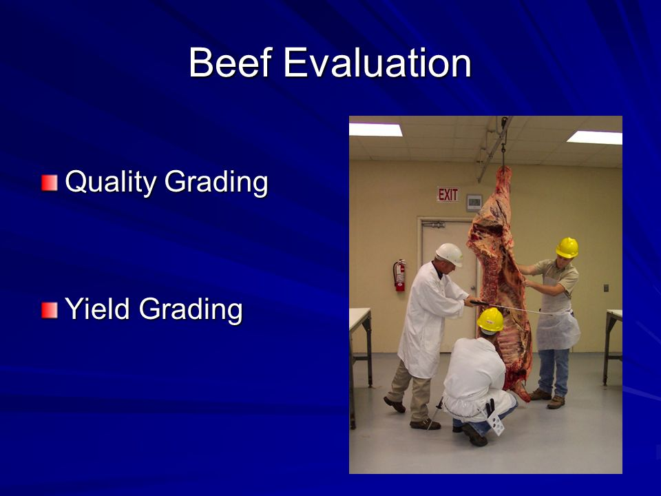 Beef Evaluation Quality Grading Yield Grading