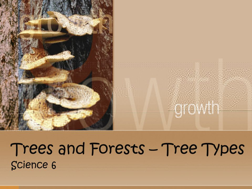 Trees and Forests – Tree Types Science 6