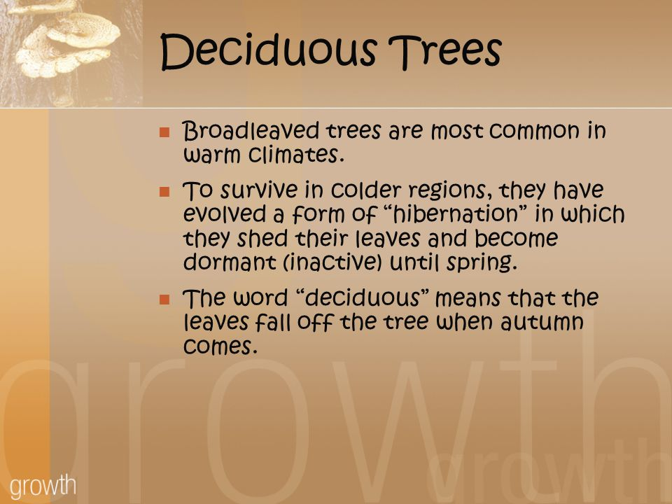 Deciduous Trees Broadleaved trees are most common in warm climates.