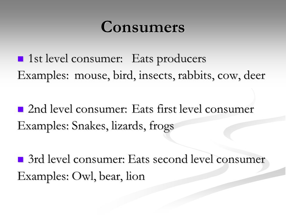 Consumer Pyramid Producers 1 st level consumers 2 nd level consumers 3 rd level consumers