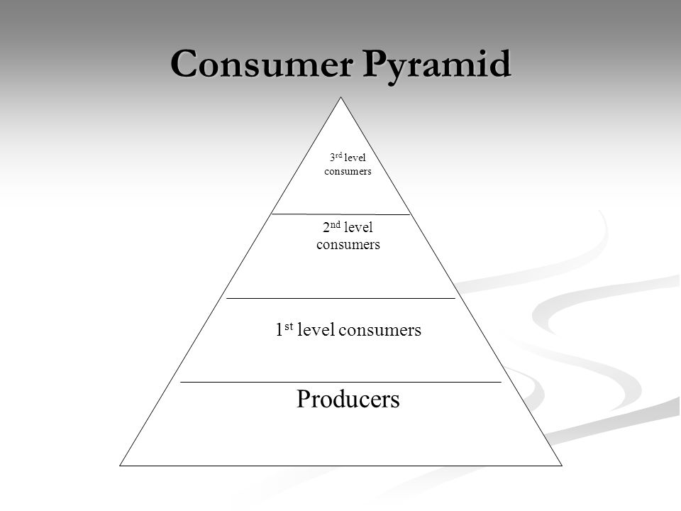 Energy Pyramid Contains the most energy Contains the least energy As organisms eat food, Energy is lost as heat, waste, and is used for life processes.