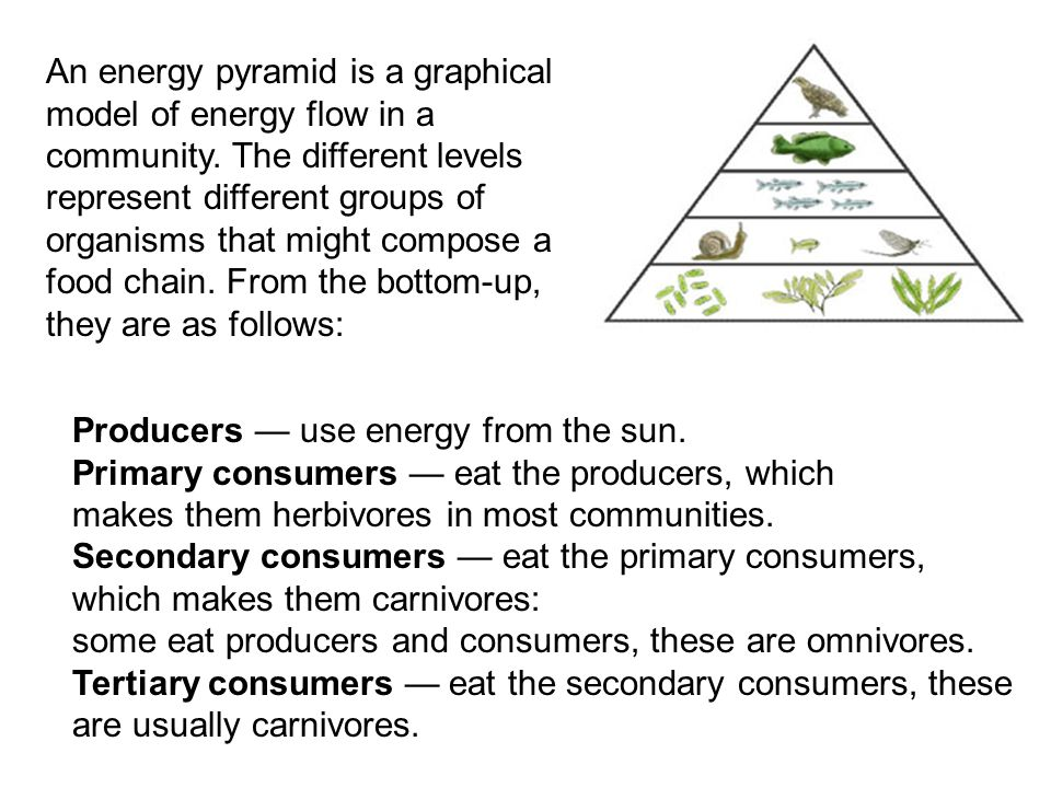 An energy pyramid is a graphical model of energy flow in a community. The different levels represent different groups of organisms that might compose