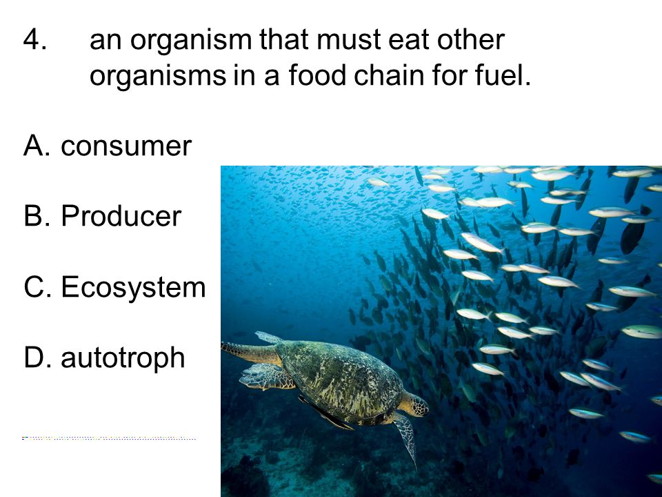 4. an organism that must eat other organisms in a food chain for fuel. A.consumer B.Producer C.Ecosystem D.autotroph