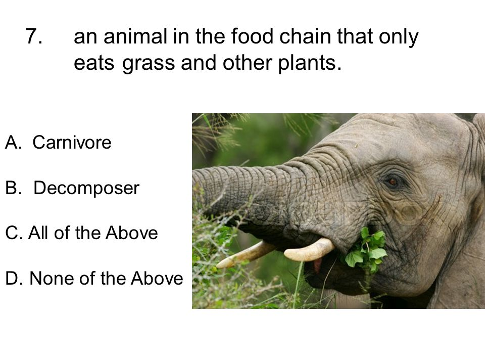 7. an animal in the food chain that only eats grass and other plants. A.Carnivore B. Decomposer C. All of the Above D. None of the Above