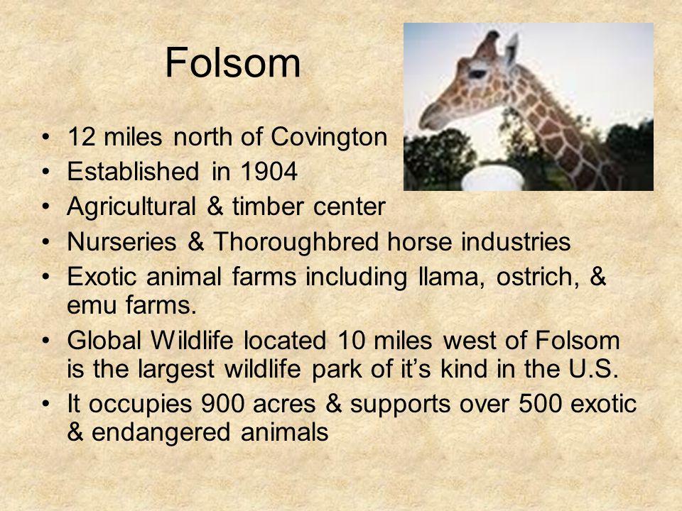 Folsom 12 miles north of Covington Established in 1904 Agricultural & timber center Nurseries & Thoroughbred horse industries Exotic animal farms incl