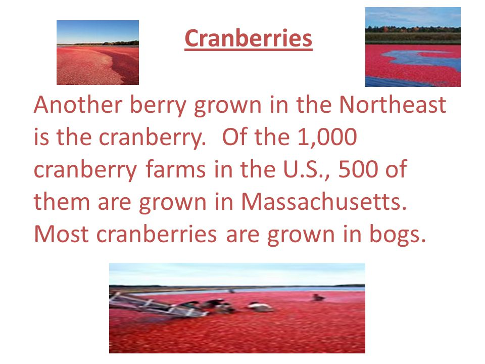 Cranberries Another berry grown in the Northeast is the cranberry. Of the 1,000 cranberry farms in the U.S., 500 of them are grown in Massachusetts. M