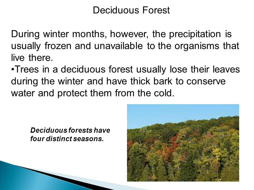 Deciduous Forest During winter months, however, the precipitation is usually frozen and unavailable to the organisms that live there. Trees in a decid