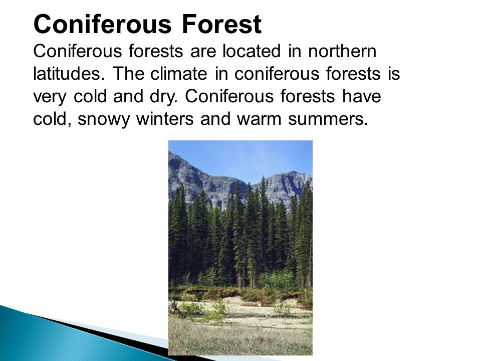Coniferous Forest Coniferous forests are located in northern latitudes. The climate in coniferous forests is very cold and dry. Coniferous forests hav
