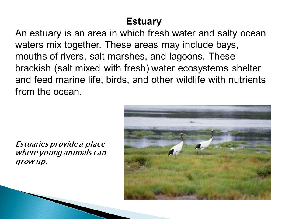 Estuary An estuary is an area in which fresh water and salty ocean waters mix together. These areas may include bays, mouths of rivers, salt marshes,