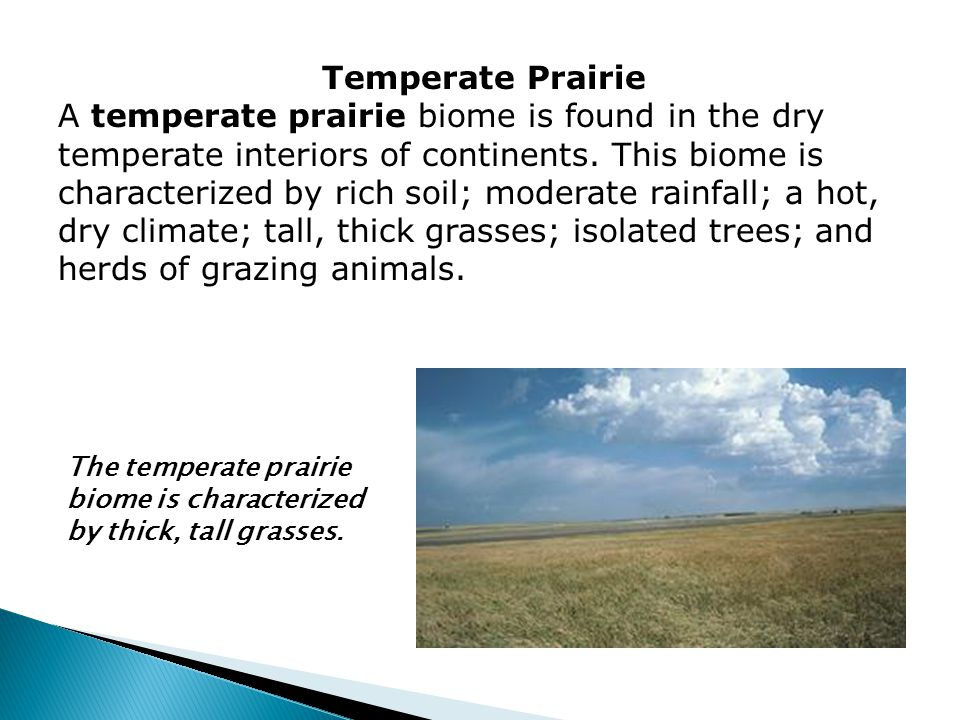 Temperate Prairie A temperate prairie biome is found in the dry temperate interiors of continents. This biome is characterized by rich soil; moderate