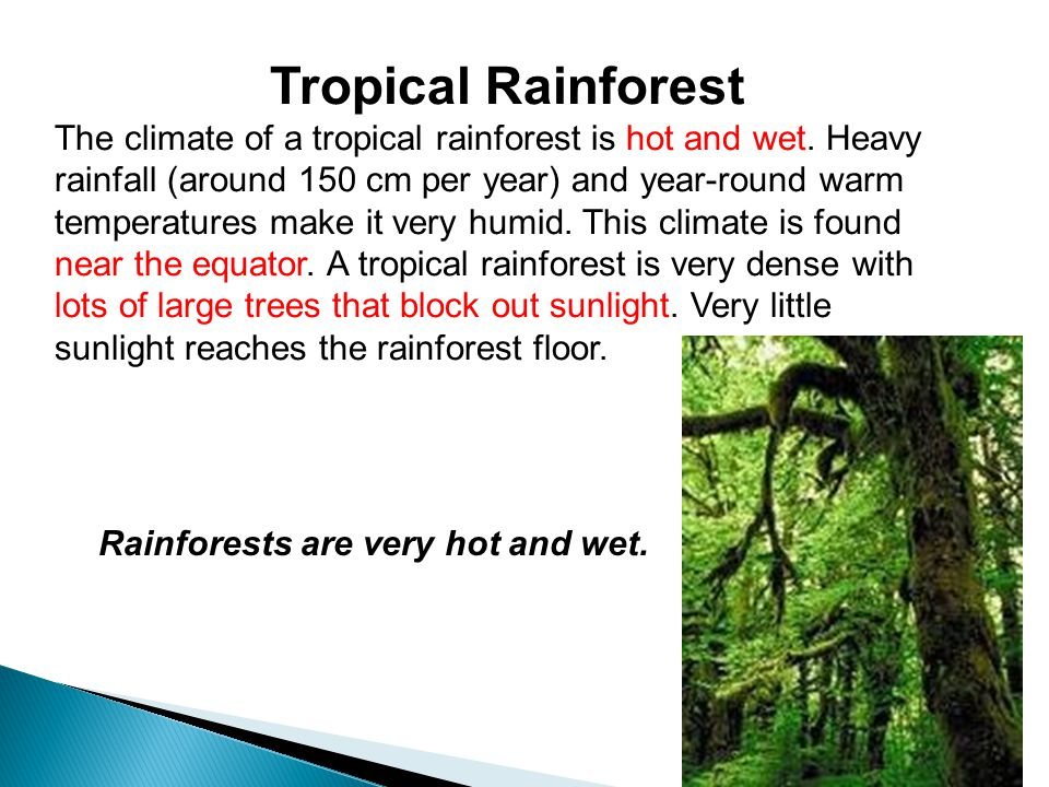 Tropical Rainforest The climate of a tropical rainforest is hot and wet. Heavy rainfall (around 150 cm per year) and year-round warm temperatures make