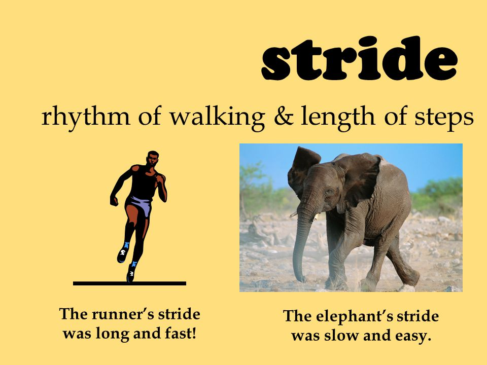 stride rhythm of walking & length of steps The runner's stride was long and fast.