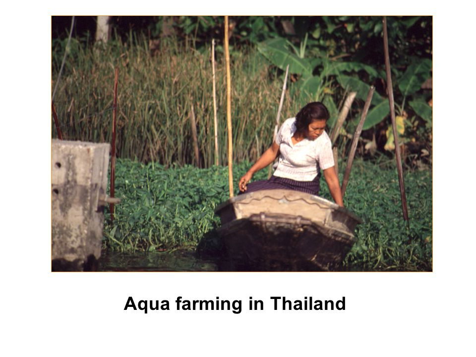 Aqua farming in Thailand