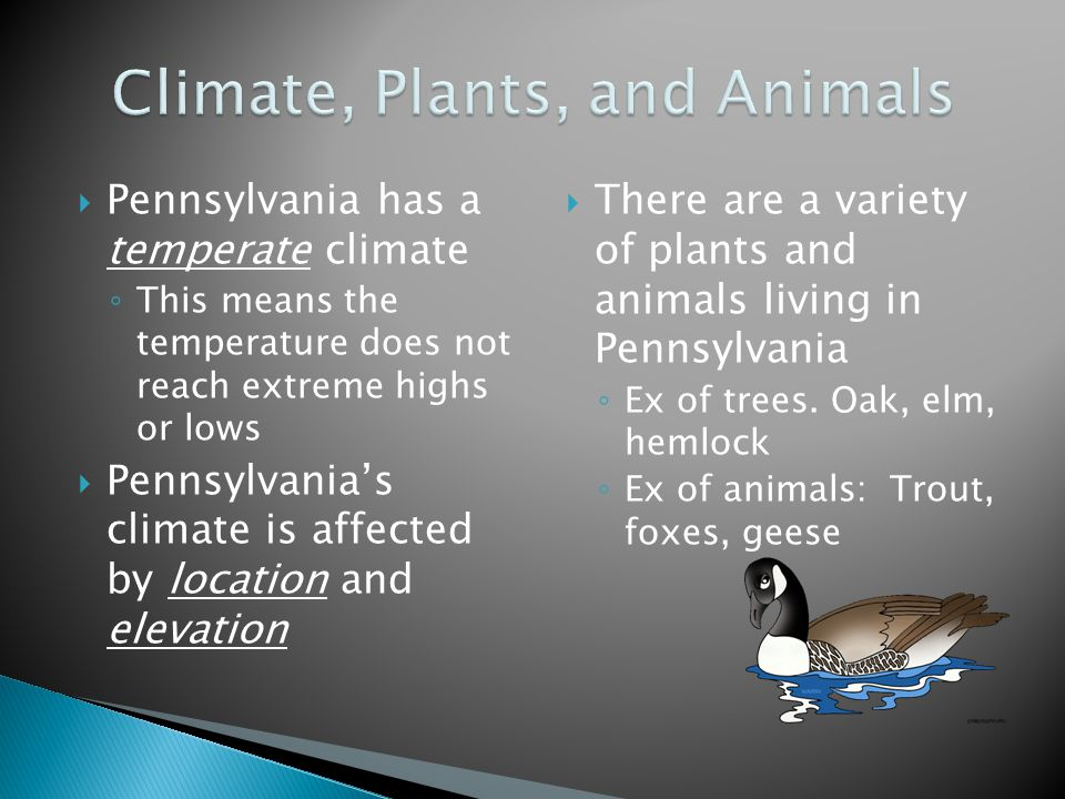  Pennsylvania has a temperate climate ◦ This means the temperature does not reach extreme highs or lows  Pennsylvania's climate is affected by location and elevation  There are a variety of plants and animals living in Pennsylvania ◦ Ex of trees.