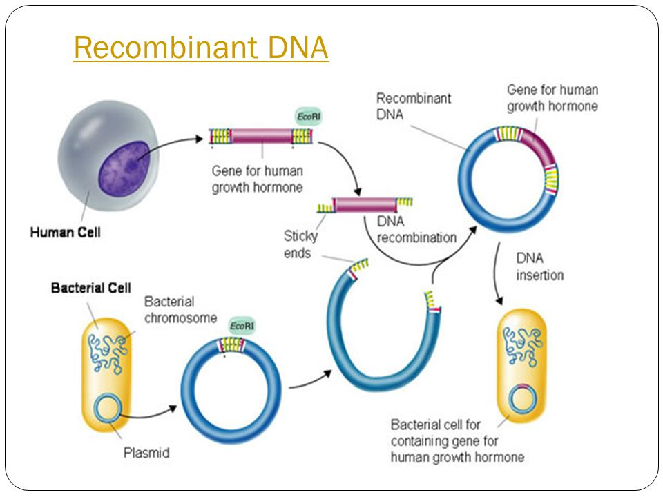 Uses of Genetic Engineering (Impact) In Medicine For example, Diabetics is a condition in which the pancreas cannot make insulin essential hormone controlling the amount of sugar in blood.